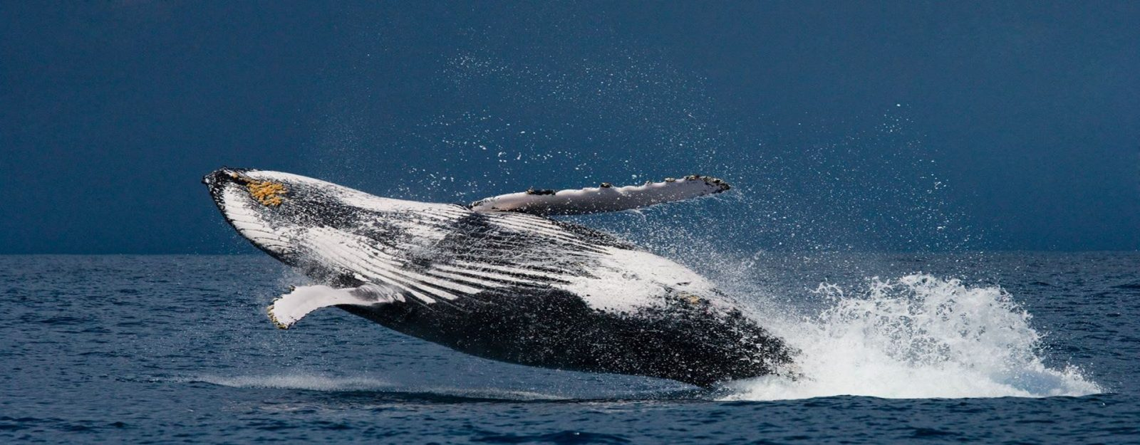 Madagascar - Whale-watching