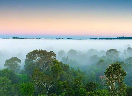 Alta Floresta Rainforest