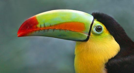 Parque das Aves in Iguazu