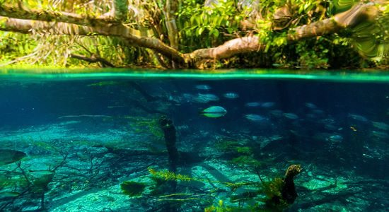 The clear water of the Sucuri River is surprising and allows you to see underwater for several meters away because of its limestone composition of the region's rocks.