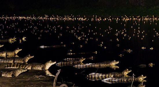 Caymans at night