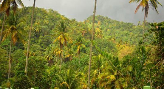 Fond Doux Rainforest