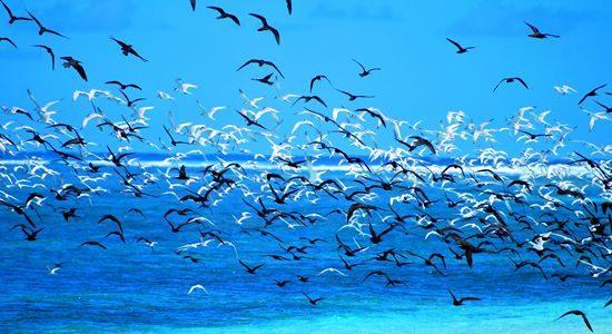 Ile Aux Nattes Birds