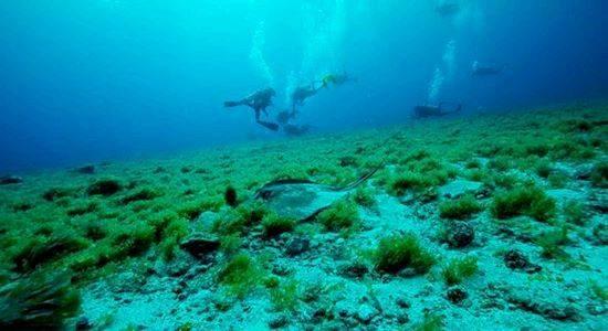 Noronha Diving