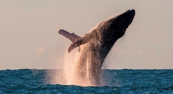 Whales Manafiafy